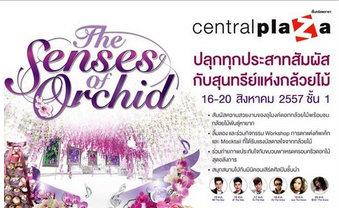 งาน The Senses of Orchid