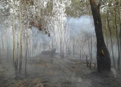 ไฟไหม้ป่าพรุควนเคร็งชาวบ้าวเผาหาสัตว์