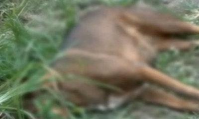 สลด! คนร้ายวางยาเบื่อสุนัขเฝ้าของกลาง ตาย 5 ตัว