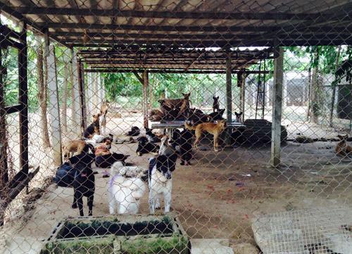 สุนัขกว่าพันตัวศูนย์รับเลี้ยงสัตว์จรจัดอาหารไม่พอ