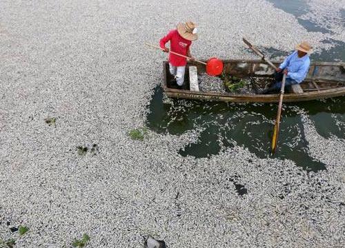 ปลาตายนับหมื่นในทะเลสาบเม็กซิโกยาว9กม.