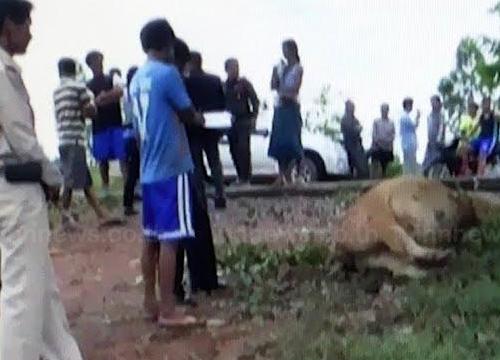 ปราจีนบุรีโจรขโมยวัวพระราชทานก่อนตีจนตาย