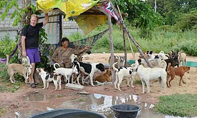 ฝรั่งใจบุญเก็บสุนัข แมวจรจัดมาเลี้ยงเหมือนลูกกว่า 200 ตัว