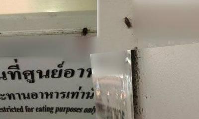 ช็อก! ศูนย์อาหารห้างดัง แมลงสาบทำรังหลังป้าย