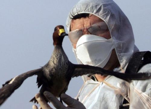 ยุโรปหวั่นหวัดนกระบาดหลังพบเชื้อH5N8สัตว์ปีก