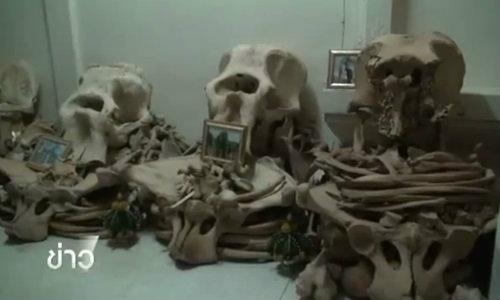 ยึดซากช้าง-ชิ้นส่วนแช่แข็งกว่าร้อยรายการที่วัดสวนป่าพุทธสถานสุประดิษฐเมธี