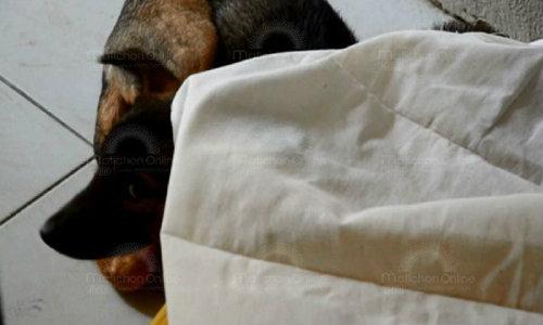 หมายอดกตัญญูนอนเฝ้าศพเจ้าของ วัย 63 ปี ตกบันไดหัวฟาดเสียชีวิตไม่ยอมห่าง