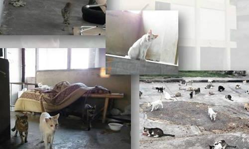 วอนช่วยแมวแฟลตราชตฤณมัย ก่อนตึกโดนทุบ