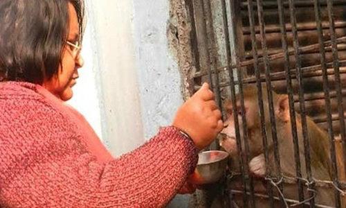 สามีภรรยาชาวอินเดียยกมรดกให้ลิง
