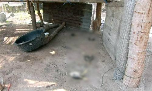 ชาวบ้านผวาผีปอบ คืนเดียวไก่ตายยกเล้า 34 ตัว