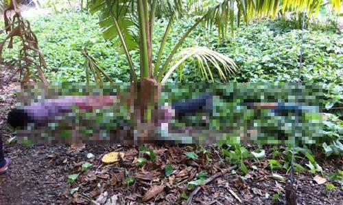 ชาวสวนใบเตยหอม ถูกไฟช็อตดับ 3 ศพ