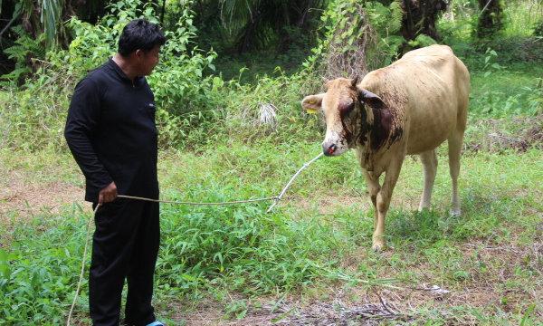 นี่หรือคน? สาดน้ำกรดใส่แม่วัวท้องแก่ สาหัสเสี่ยงตาบอด