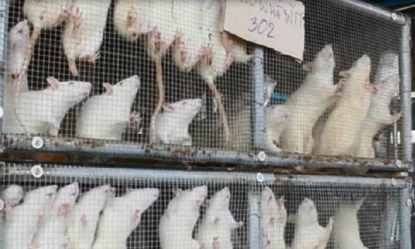 ตร.ไม่เอาผิด ฟาร์มงูใช้ ′หนูขาว′ เป็นอาหาร ชี้ไม่เข้าข่ายทารุณสัตว์
