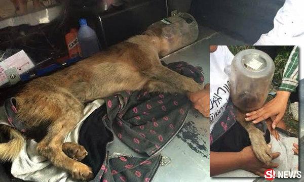 คนนครปฐมรวมพลัง ช่วยสุนัขหัวติดกระป๋องกว่า 6 วัน