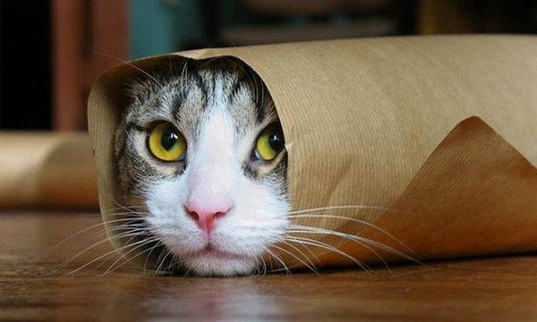 โอปป้ากินแมว! หนุ่มเกาหลีต้มแมวสดๆส่งขายร้านอาหารเพื่อสุขภาพ