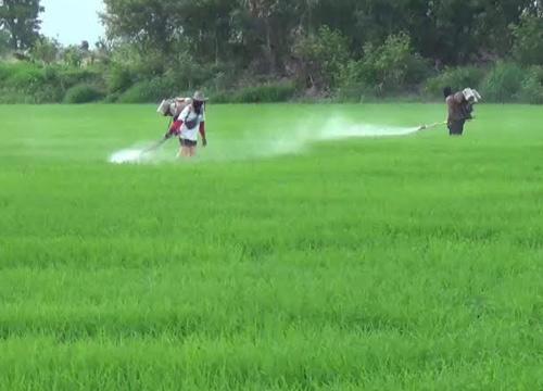 กรมควบคุมโรคเตือนชาวเกษตรกรป้องโรคฉี่หนู