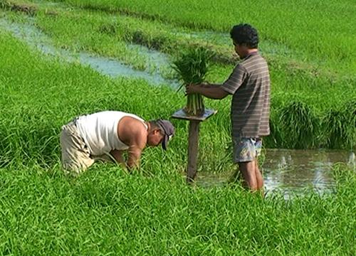 วท.ตั้งคณะรับมือแก้ภัยแล้งช่วยเกษตรกร