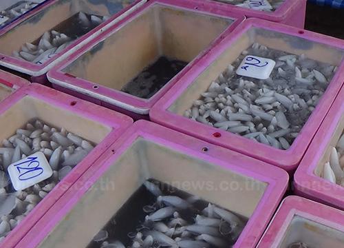 อ่างทองปลาหมึกสดแพงขึ้นเริ่มขาดตลาด