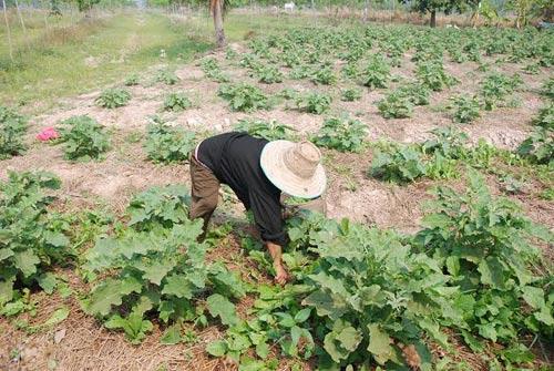 สธ.ห่วงเกษตรกรโดนพิษยาฆ่าแมลงเพิ่มขึ้น