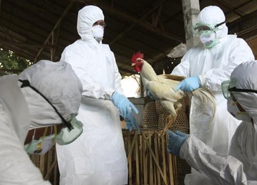กรมปศุสัตว์เฝ้าระวังไข้หวัดนกเชิงรุกทั่วประเทศ
