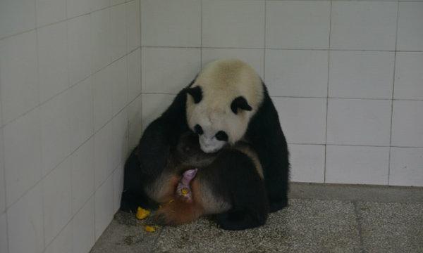 แฟนคลับเฮ! หลินปิง ให้กำเนิดลูกฝาแฝด