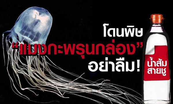 น้ำส้มสายชูกู้ชีพ! แนะนักท่องเที่ยวทะเลอ่าวไทย พกเผื่อฉุกเฉินโดนพิษ ′แมงกะพรุนกล่อง′