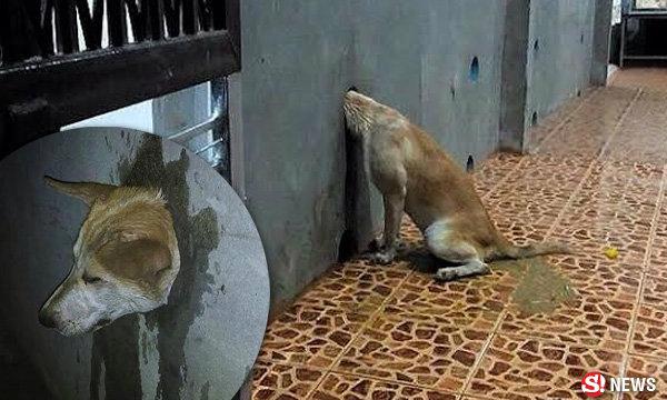 น่าสงสารแท้ น้องหมาหัวติดรู ร้องโหยทั้งคืน จนท.ต้องช่วย
