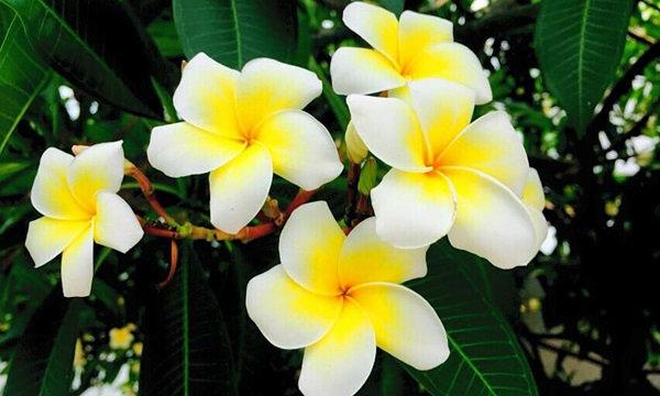 นักกฎหมายยันแชร์ภาพดอกไม้ได้ไม่ผิดกฎหมายลิขสิทธิ์ แต่อย่าดัดแปลง