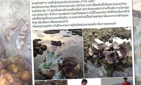 รู้ตัวกลุ่มทำลายหอยมือเสือ-ปะการังเกาะหลีเป๊ะ