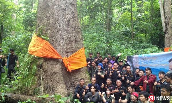 ฮือฮาค้นพบ ต้นจำปีหลวงป่าลำปาง คาดต้นใหญ่ที่สุดในโลก