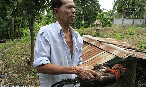 ไก่กว่าร้อยตายปริศนายกหมู่บ้านในอยุธยา ชาวบ้านผวา เชื่อปอบ-กระสืออาละวาด