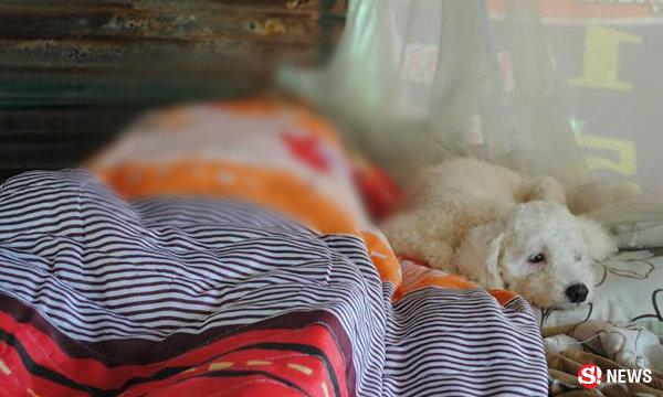 ภาพสะเทือนใจ! หนุ่มใหญ่นอนหลับตาย สุนัขเฝ้าศพไม่ห่าง