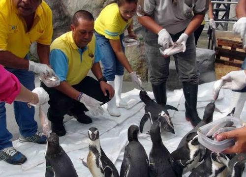 สงขลาฝึกเพนกวินสร้างสีสันช่วงปีใหม่