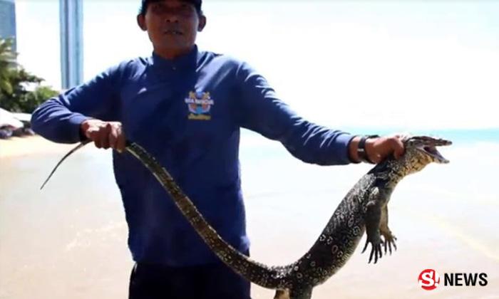 ตกใจทั้งหาด ไม่กล้าเล่นทะเล เห็นสัตว์คล้ายจระเข้ว่ายอยู่