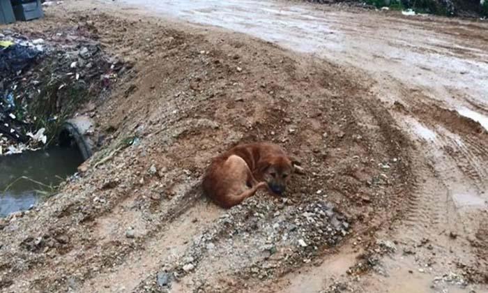 สุนัขรอเจ้าของรับกลับบ้าน นอนตากฝนข้างกองขยะ หลังถูกนำมาทิ้งกว่า 2 เดือน