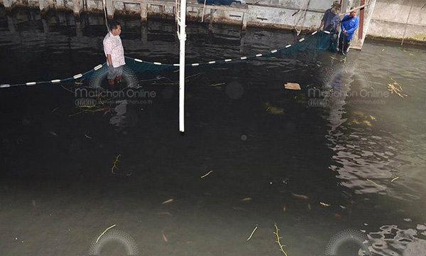 วางอวนจับปลาภายในห้างนิวเวิลด์ ย่านบางลำพู หลังถูกปล่อยทิ้งร้างมานาน!