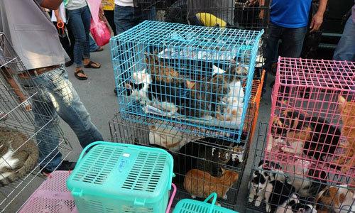 เวทนา! บุกช่วยแมว 58 ชีวิต ถูกขังไว้สูบเลือดขาย