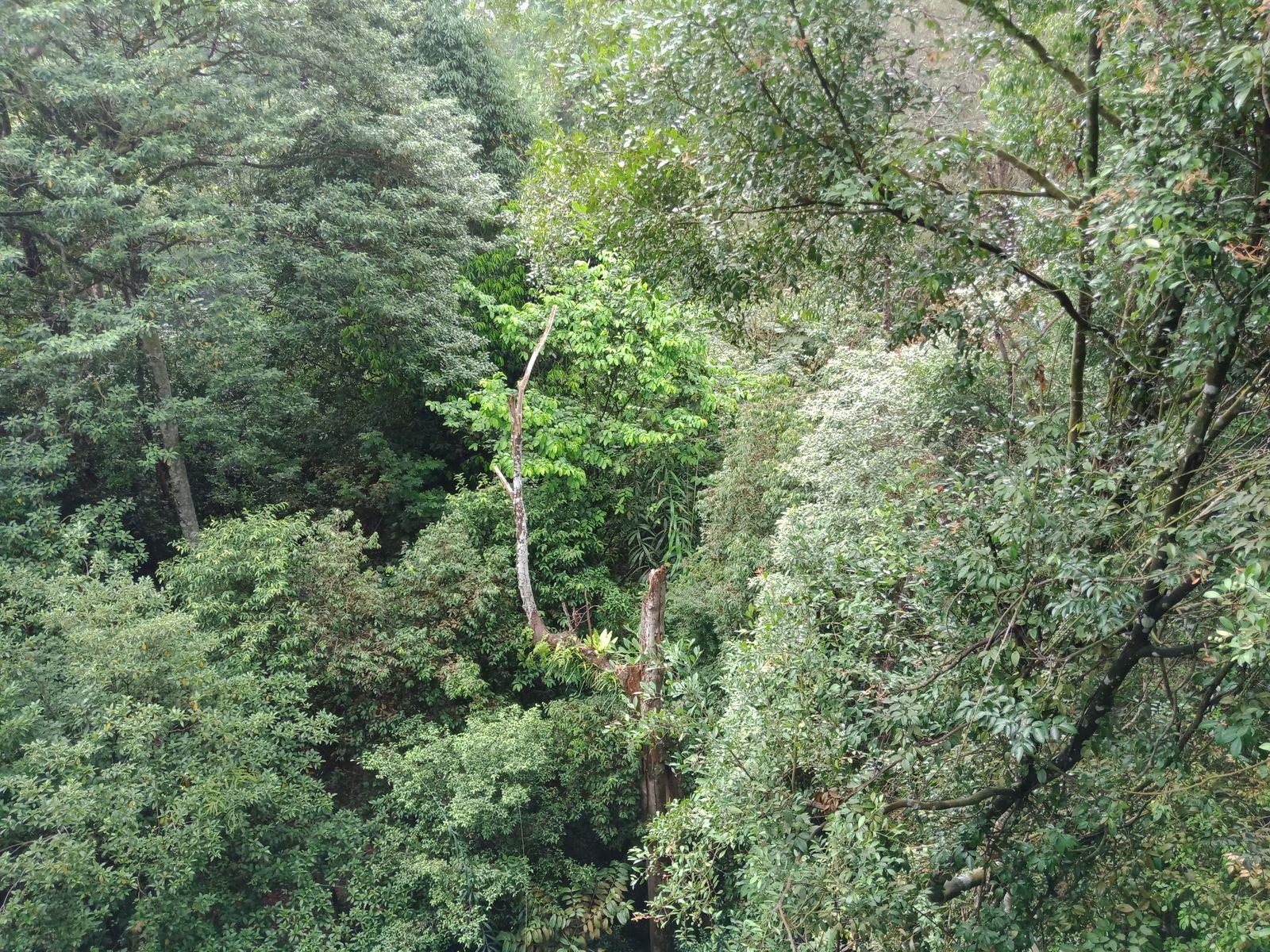 เราเดินอยู่บนยอดไม้ (TreeTop Walk)  จริงๆ